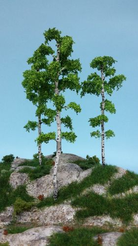 Birch wood 18-19-20 cm (x3)