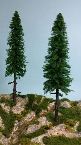 silver fir with trunk cm 30 (x2)