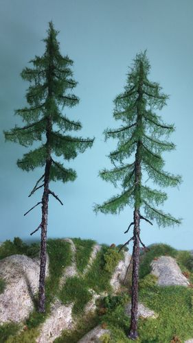 red fir tree 20-22 x 2