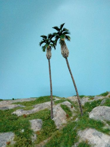 palm of California cm 12-14 (X2)