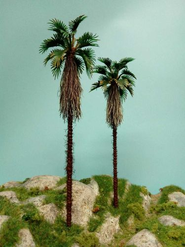 palm of Japan  cm 24 - 26 (X2)